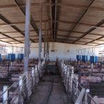 Cubiertas y Falsos Plafones para Granjas Avícolas 2